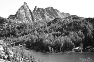 wilderness-black-and-white_BM